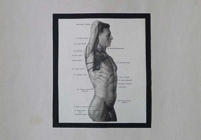 Prywatny atlas anatomiczny - WĄTROBA - Marek Chlanda